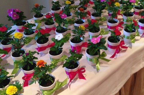 Potted Plants for Party Favors